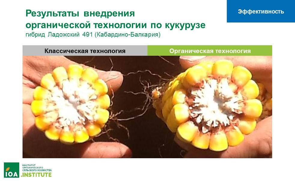 Органическое земледелие: эффективность