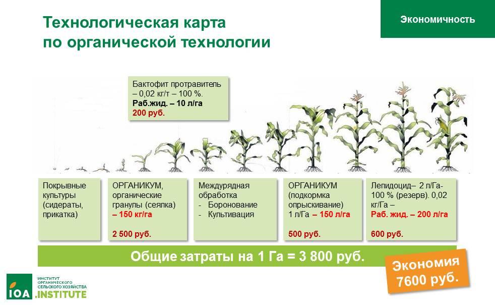 Органическое земледелие: экономичность
