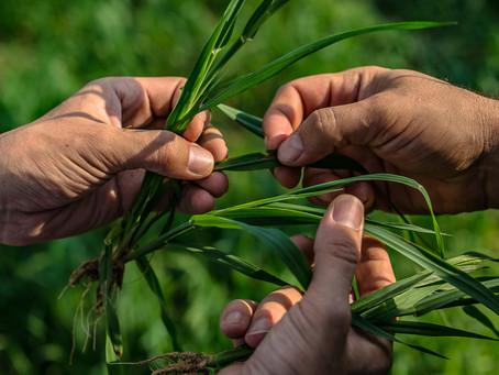 Основатель «Этномира» займется органическими удобрениями