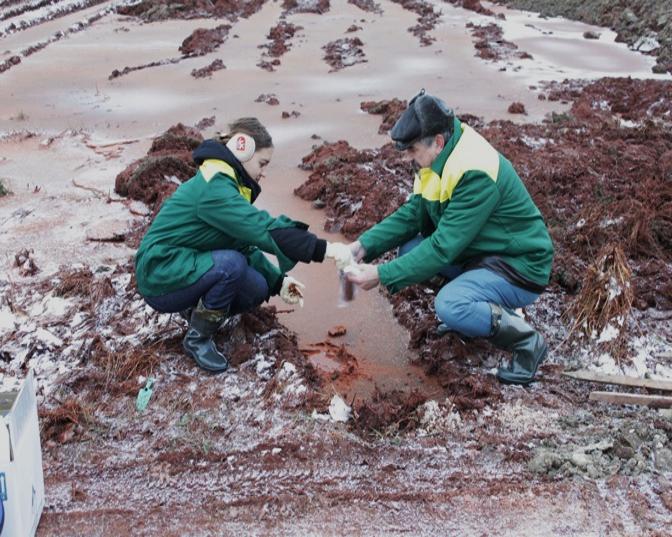 Забор проб и проведение испытаний по сорбции тяжелых металлов на месте катастрофы на глиноземном заводе. г. Айка (Венгрия, 2010 год)