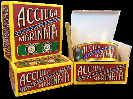 acciuga_IMG_3749.png