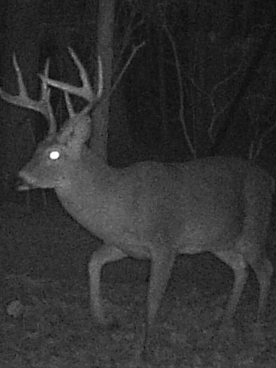 26.Big.Buck.PNG