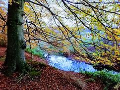 brenderup skov med vand.jpg
