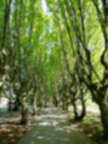 sti i skov.jpg