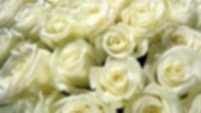 white-roses-wallpaper.jpg