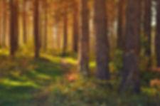 september_in_the_forest_208135.jpg