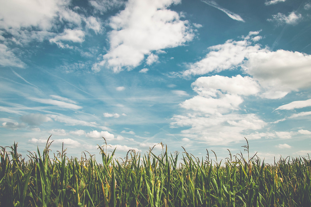 blue sky with white clouds above green grass