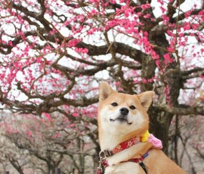 My dog loves cherries off the tree
