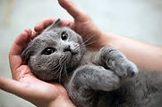 kittyhands2.jpg