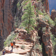 This is the trail leading up to Angels Landing.  It's  not very wide so watch your footing.  A fall on either side is lights out.