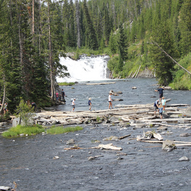 The log jam in the Yellowstone River where people play before the big falls.