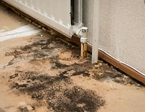 water damage mold remediation torrance r