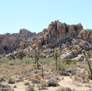 One of many rock formations in Joshua Tree