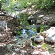 Pine Springs.