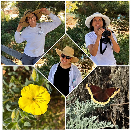 manhattan beach botanical garden volunte