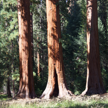 The following are all photos of Sequoia National Park