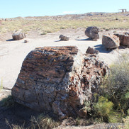 The following are photos of Petrified trees