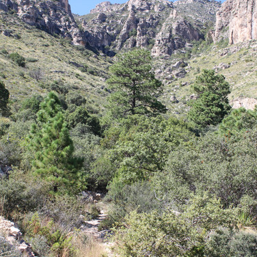 The Pine Springs area.