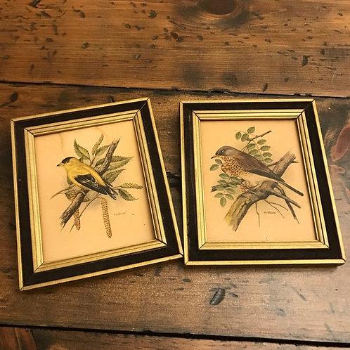 Vintage 60s, Bird Lithographs, PH Gonner, Mini Framed Bird Lithos, Mid Century