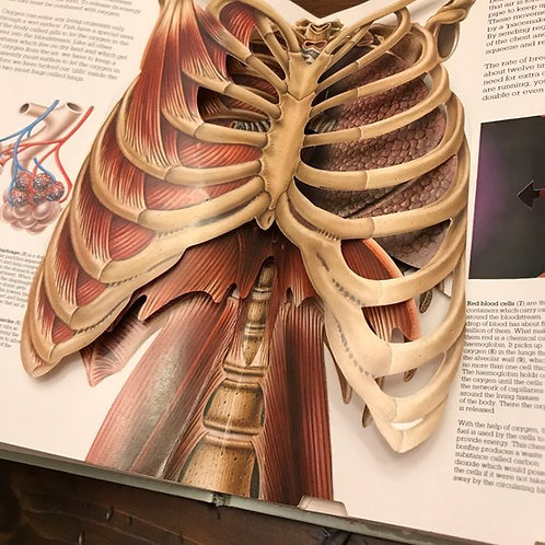 The Human Body, Pop-up Book, 3D Body Parts, Anatomy Book for Kids