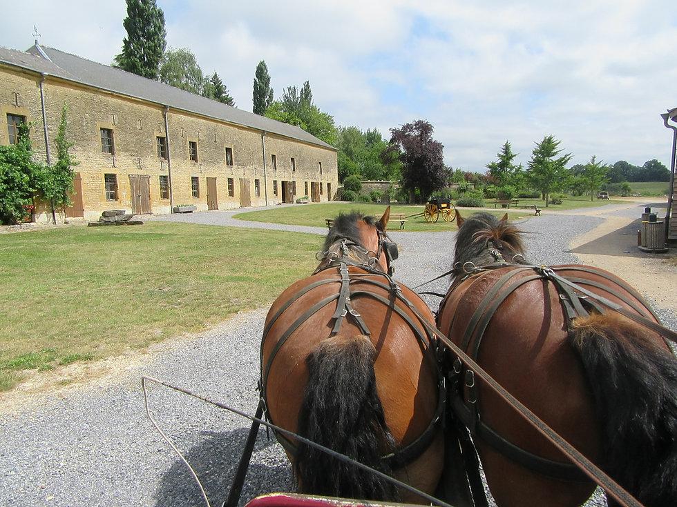photo entree chevaux dans relais.JPG