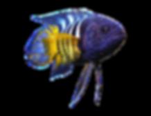 vertebrate-gill-coral-reef-fish-png