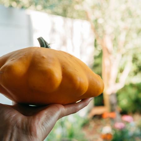Gratin de pâtisson et pommes de terre nouvelle, un légume méconnu qui gagne à être connu