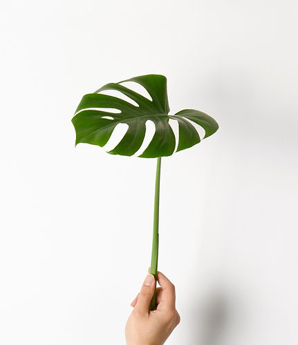 Monstera%20Leaf_edited.jpg