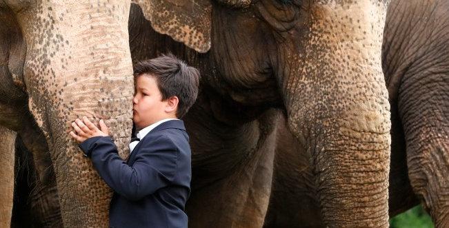 Fotoshooting mit Elefanten