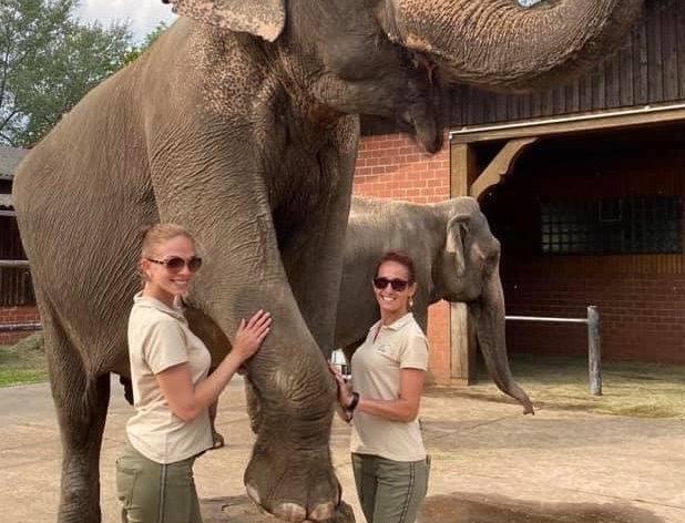 Elefantenmeeting für 2 Personen