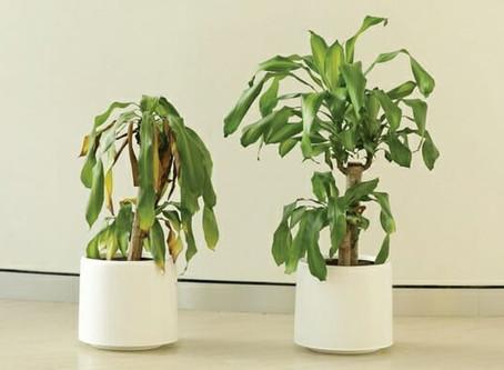 La force des mots – Builly a Plant – Ikea