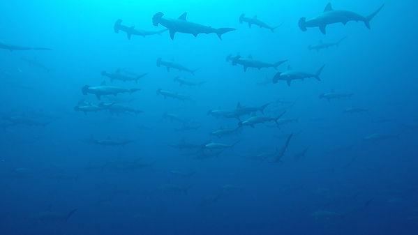 Our_Oceans_3.jpg