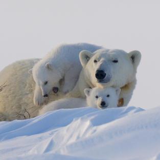 Rencontres en Arctique (1).jpg