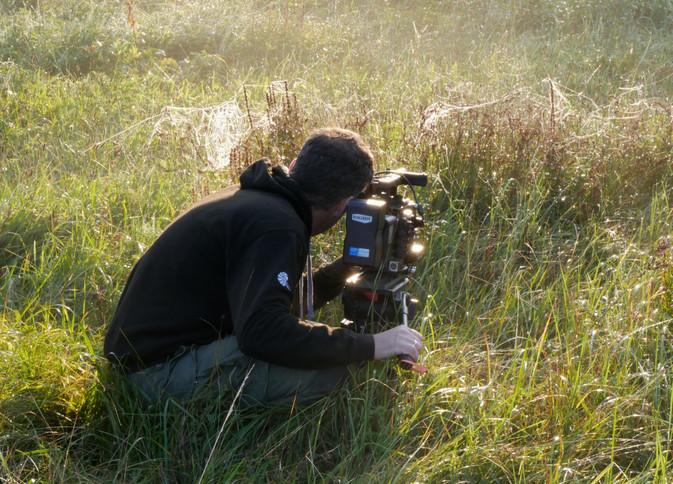 the meadow (2).jpg