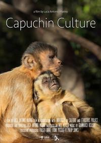 Capuchin Culture