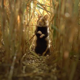 Hamsters (5).jpg