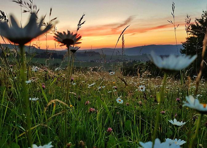 the meadow (1).jpg