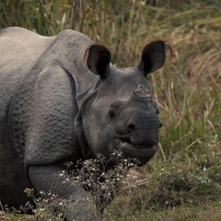 Gainda - A Conservation Story.mp4.00_07_55_16_edited.jpg