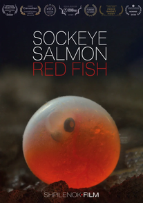 Sockeye Salmon Red Fish