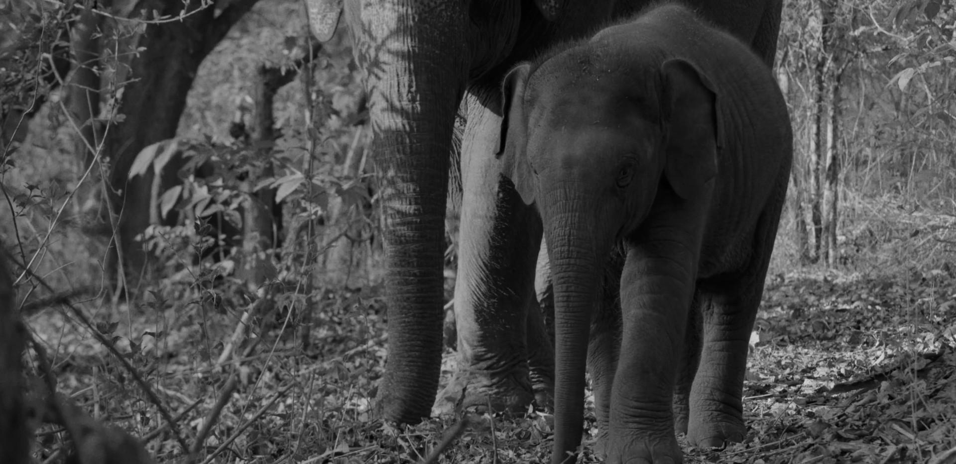 Flying Elephants1