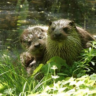 The Otter a Legend Returns (4).jpg