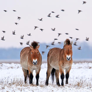 Wild Horses (5).jpg