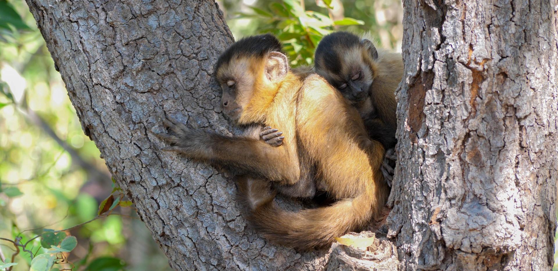 Capuchin cULTURE (4).jpg