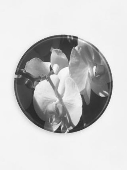 Black and White Orchid Tray