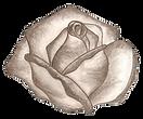 Logo la vie en rose 001_edited.png