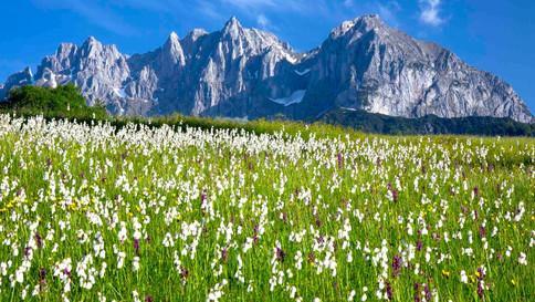 Videoclips Tirol