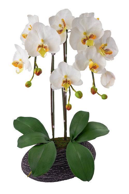 Bel Giardino Phalaenopsis White Centerpiece in Rock Base