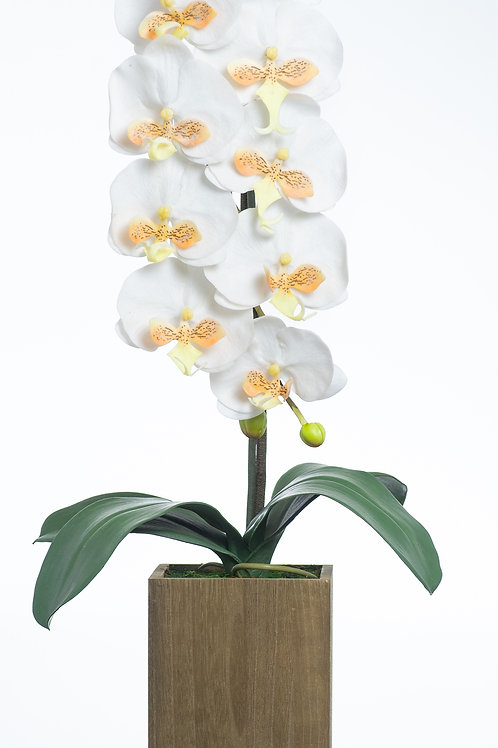Bel Giardino White / Yellow Phalaenopsis in Wooden Centerpiece