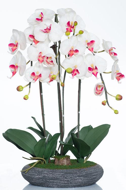 Bel Giardino White/Cream Phalaenopsis in Charcoal Ceramic Centerpiece