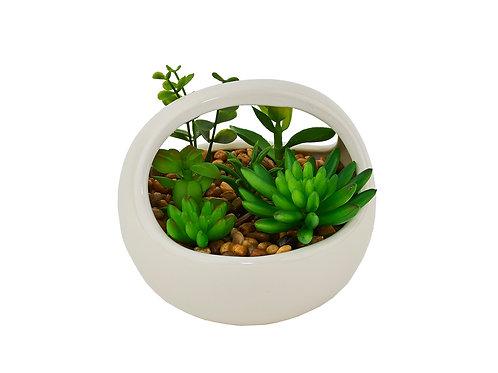 Bel Giardino Cactus Dish Garden in White Ceramic Container